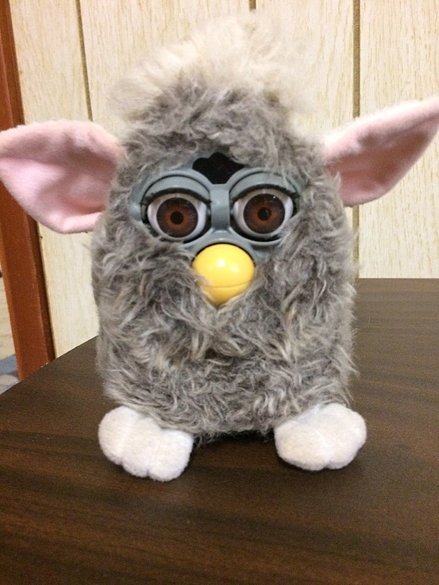 Furby - Credit by Deb Turner