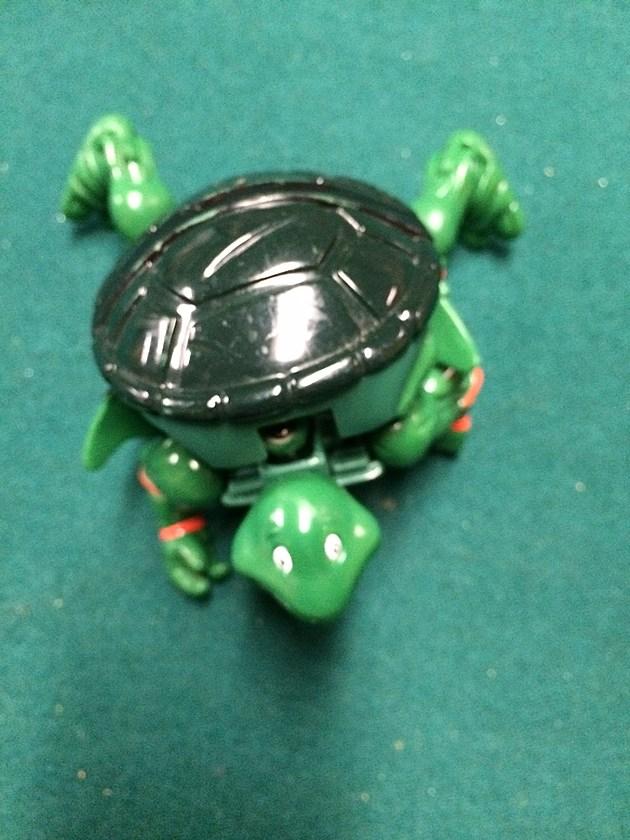 Ninja Turtle - credit by Deb Turner